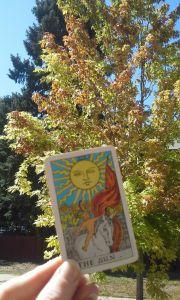 suncardandatree